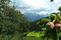 Ausblick mit Apfelbaum