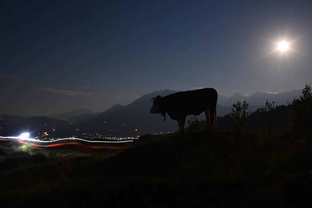 Nachtstimmung mit Kuh